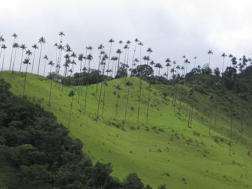 how to get to cocora valley