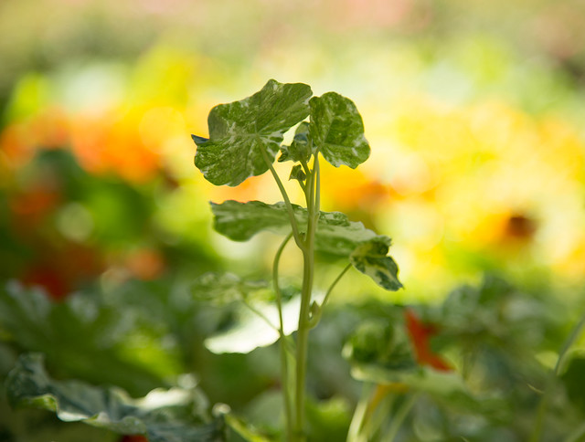 Garden - Sprouting
