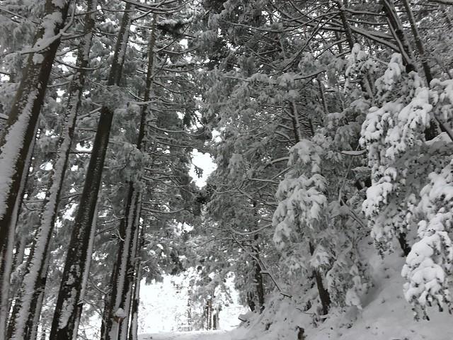 綿向山 北畑林道 頭上
