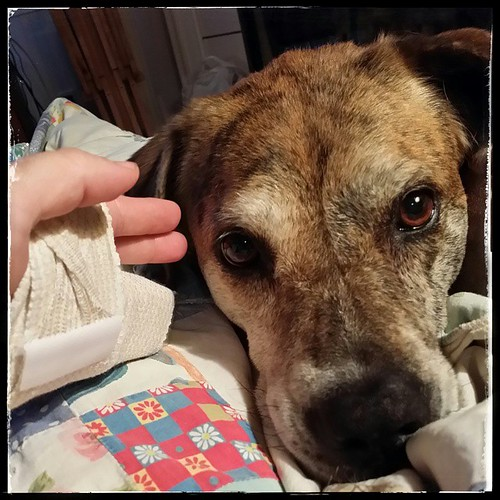 """I'm sorry about your hand, mama."" #dogsofinstagram #fracture"