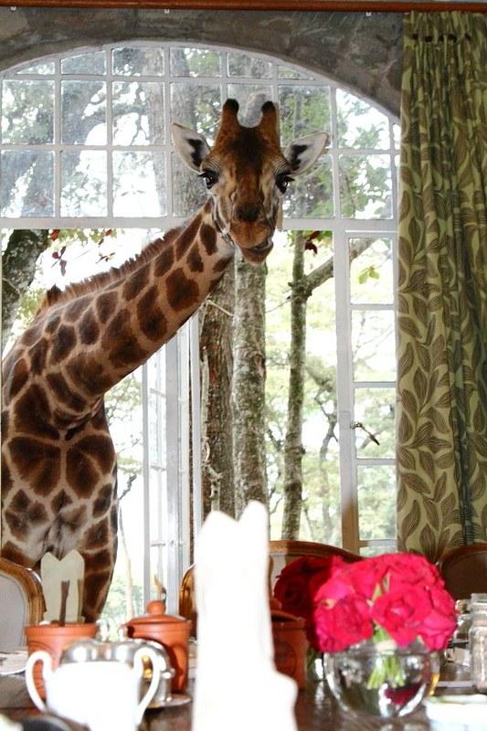 Giraffe Manor - Kenya