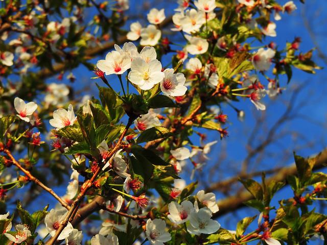 Spring in Lucerne, Switzerland