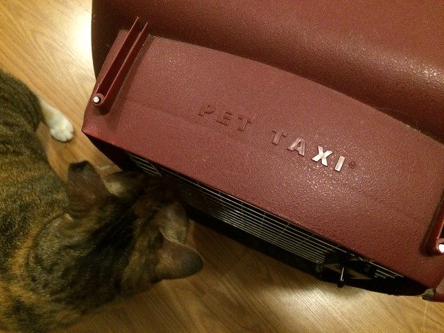 Pet Taxi Cat Carrier for an International Flight