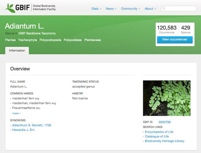 GBIF Species Search Results - Adiantum