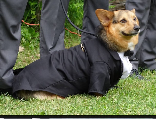 weddingdog
