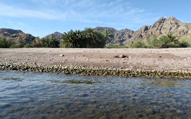 Vistes aquàtiques del meu segon lloc d'acampada, a sota de les palmeres.