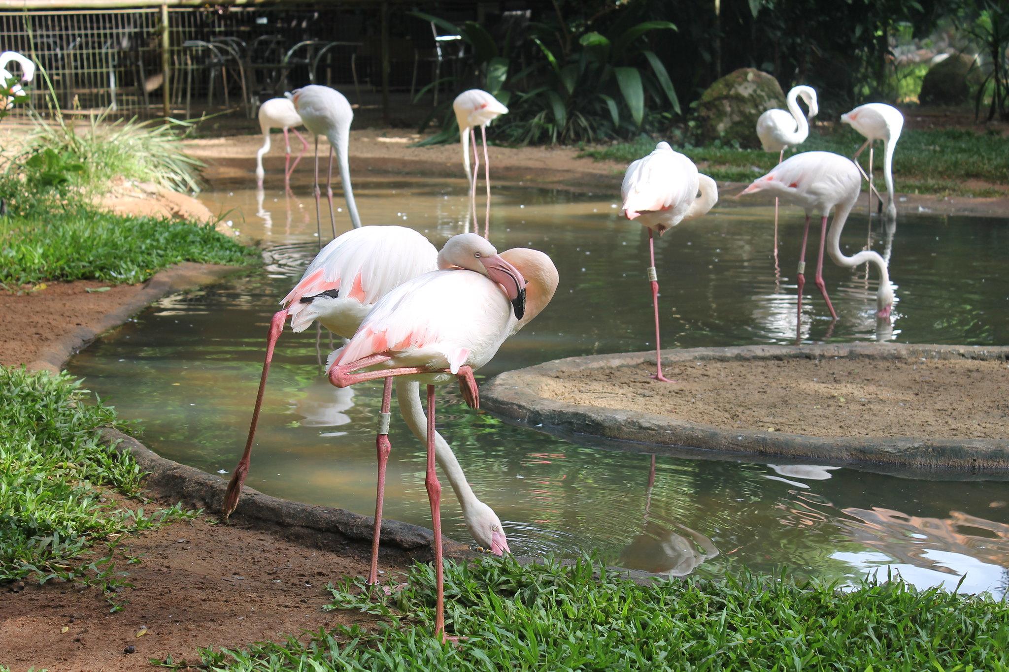 parque-das-aves5