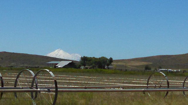 Shasta View