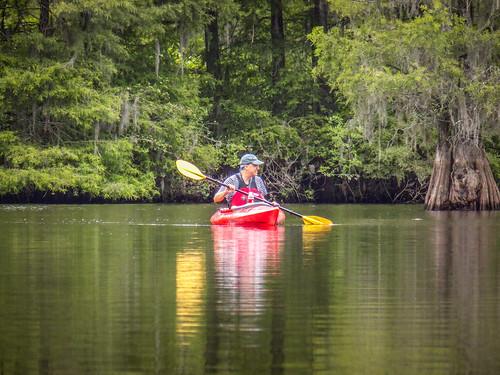 Sparkleberry Swamp-32