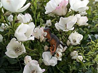 20150606 - Regi & wild roses