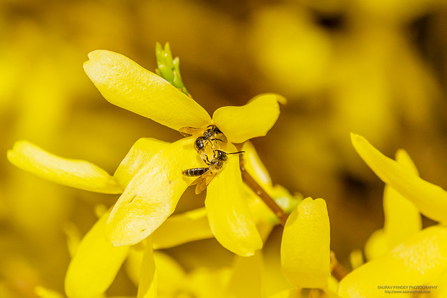 Pair of bees