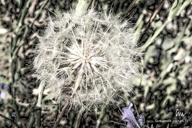 Iron Flower (#001)