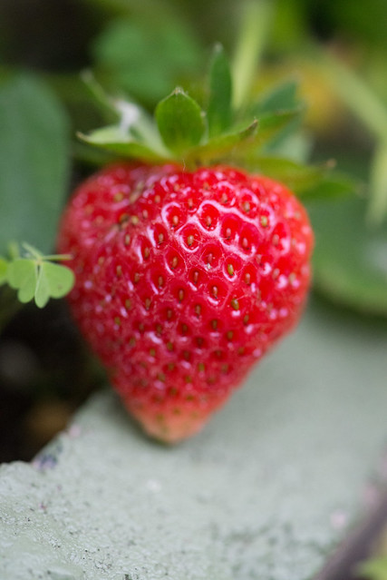 strawberries-6