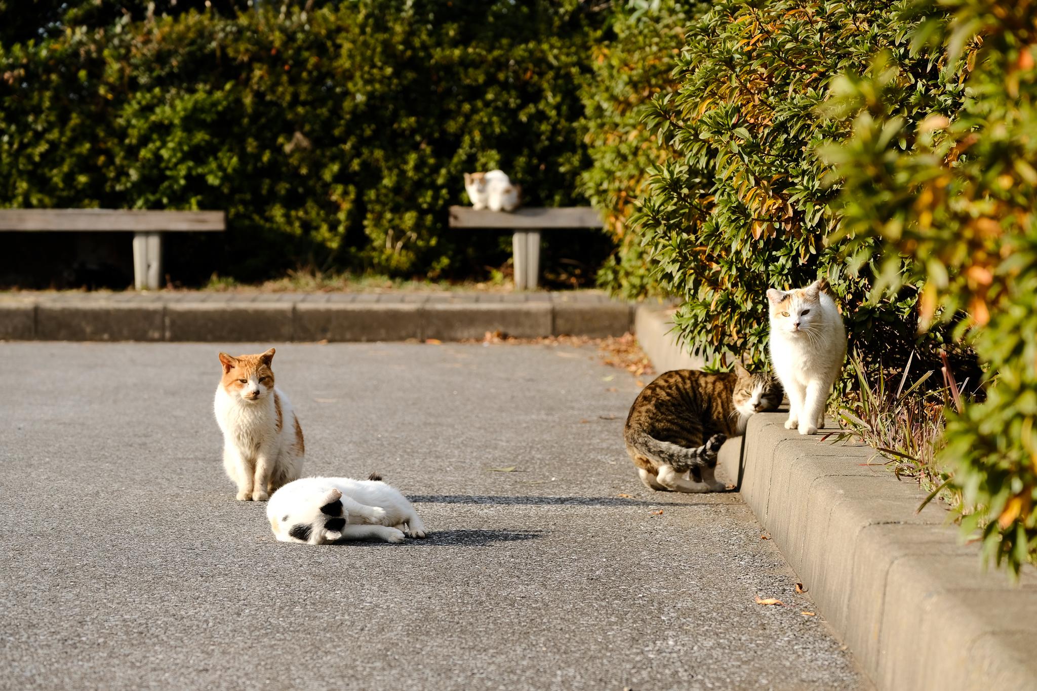 猫-2917.jpg