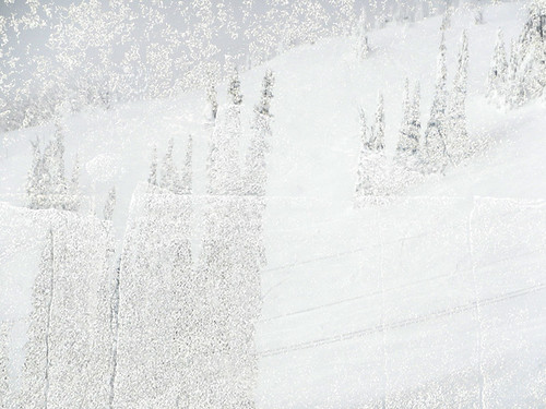 Snow & trees at Silver Star Ski Resort in Vernon, BC overlaid with a white 'blizzard' (actually white paint indicating the crosswalk on a paved street)