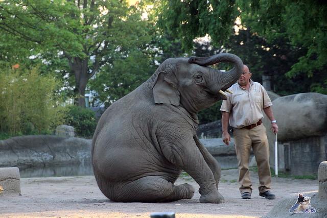Tierpark Hagenbeck Dschungelnacht 06.05.2015   118