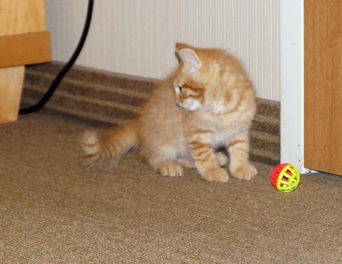 blogpaws-kittensC01652