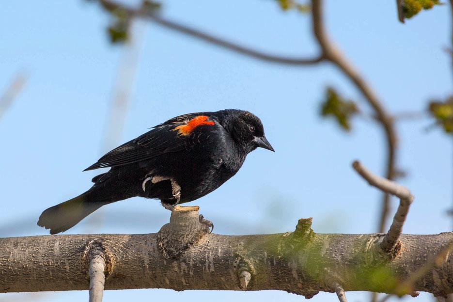 041115_birds03