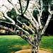 Tar covered tree again