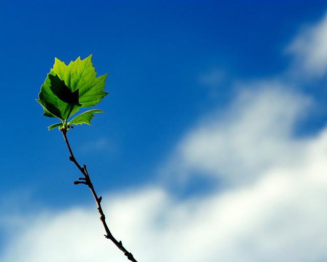 Kết quả hình ảnh cho leaf in the sky