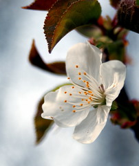Another Blossom | by Kari Helm