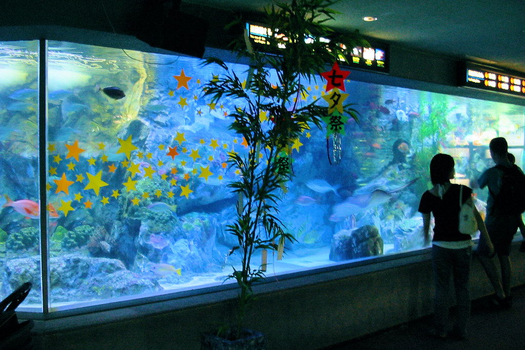 Image Result For Aquariums