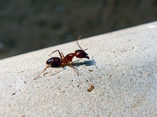 """Go to the ant and be wise"" 