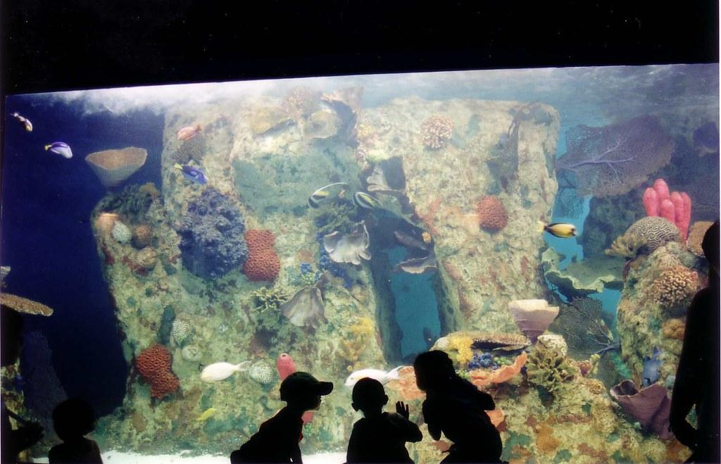 Riverbanks Zoo Aquarium Columbia Sc Bill Gathen Flickr