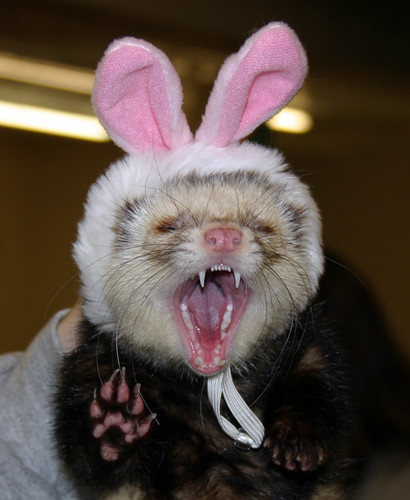 Ferret Halloween Costumes