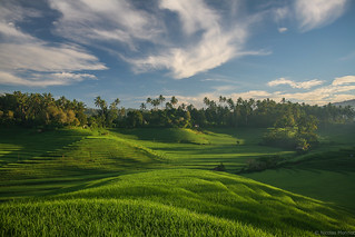 A Balinese morning | by nicointhebus (nicolas monnot)