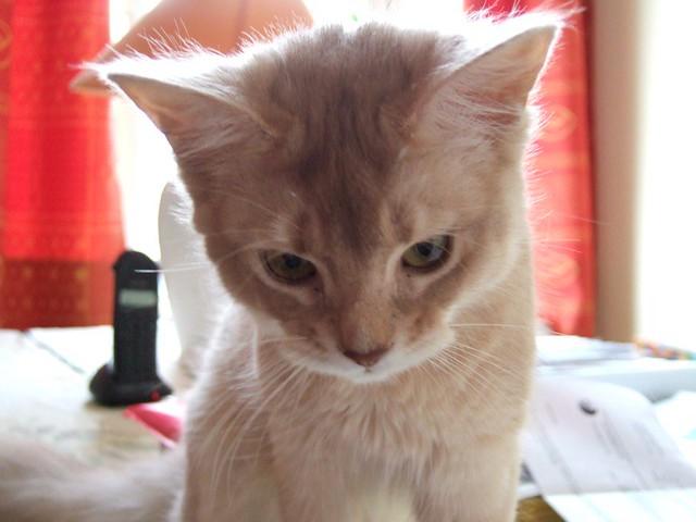 """Our cat """"Bidou"""""""