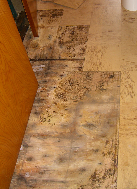 Bathroom floor dry rot : Dry rot in the bathroom flickr photo sharing