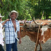 Ox cart drivers