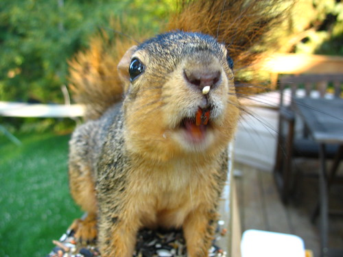 When Squirrels Attack! The last thing I saw before the ER visit... | by andrea z