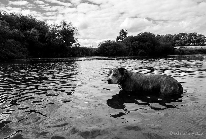 Jez in the River Stour