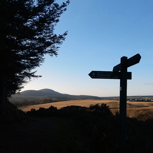 Crannoch Wood walk