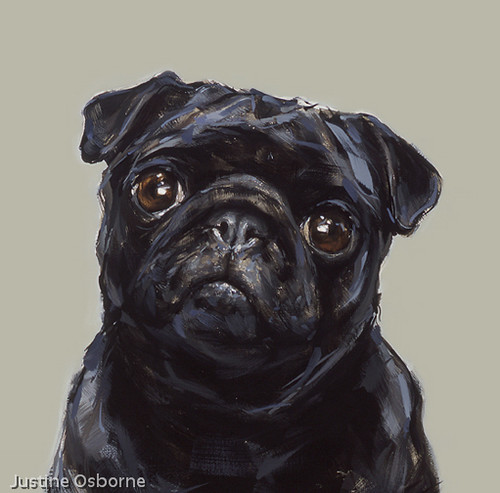 CCC201507Justine-betty_black_pug.jpg