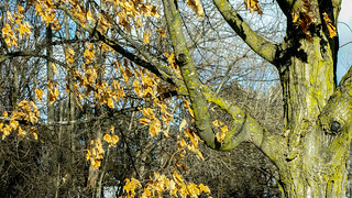 Winter Leaves | by Stephen Downes