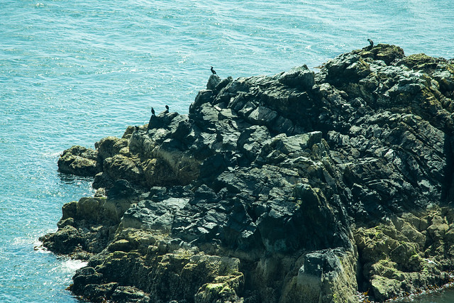 20150526-024_Howth Peninsula_Cormorants sunning on rocks