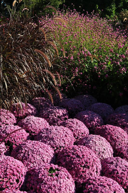 Longwood Flower Garden Walk (2)