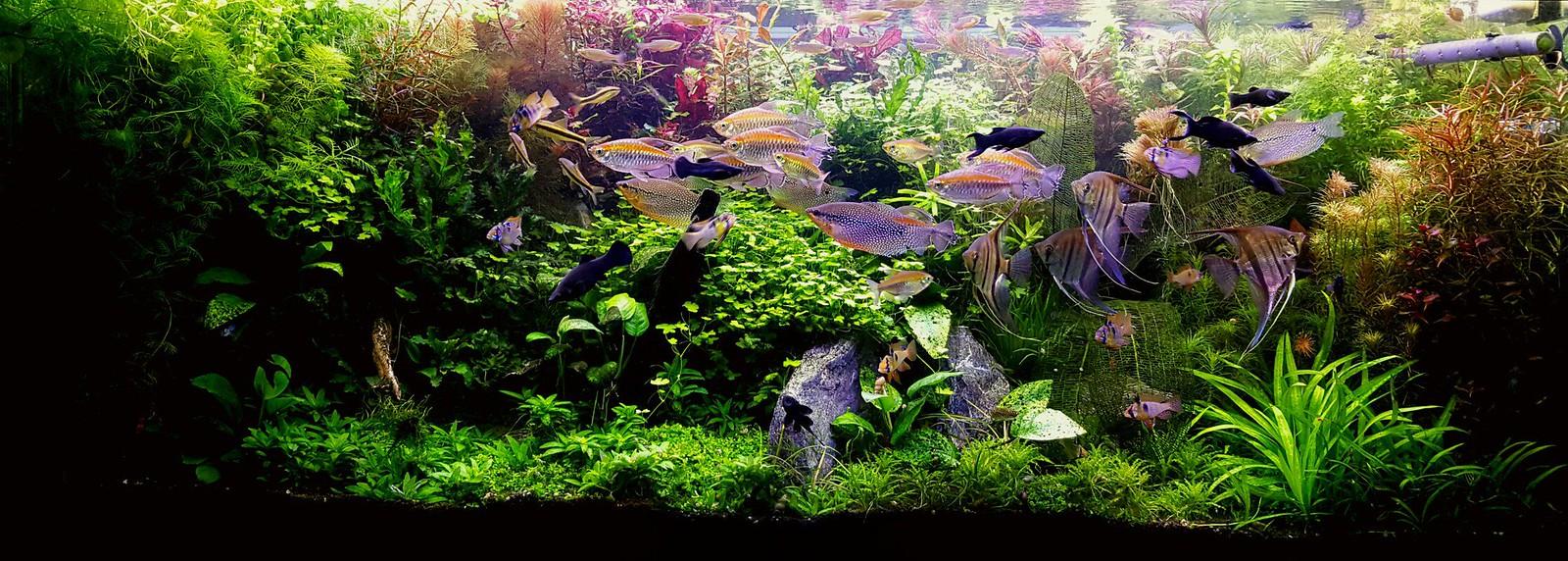 Как сделать аквариумное хозяйство фото 659