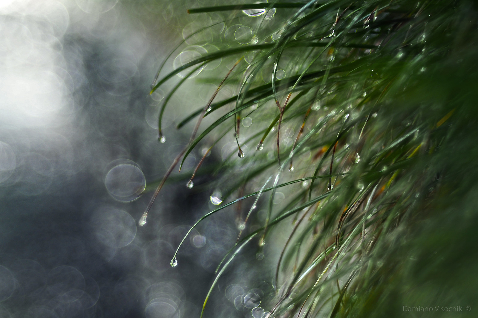 Glorious rain_c