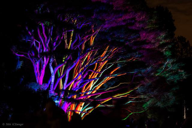 Illumination 2016 Tanyosho Pines 01