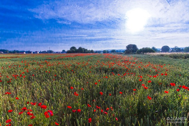 """""""Coquelicots"""" #tableau - Oissel 06/2015"""
