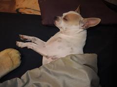 Beaker thinks he is human