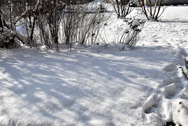 Garden in Snow 16.01 (15)