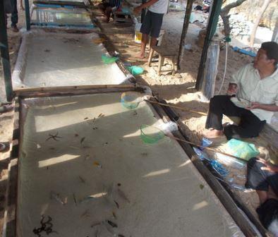 pedagang ikan hias