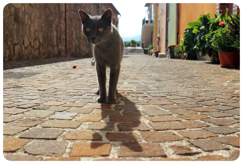 umbria cat