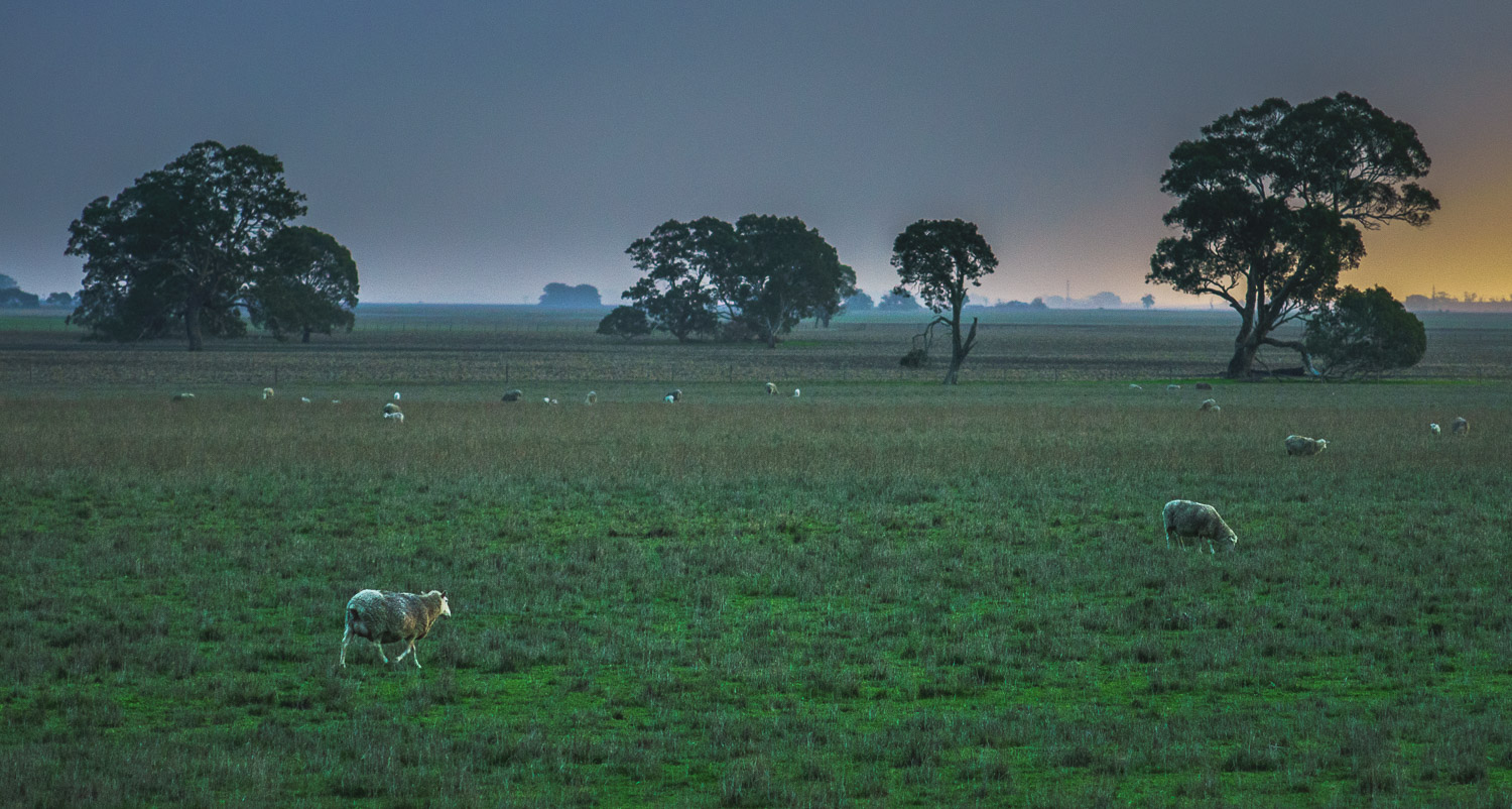 Sheep and farm land, Australia