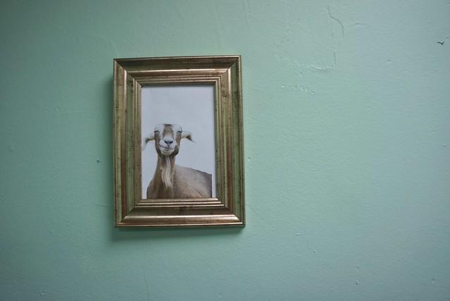 Greedy Goat Ice Cream - DSC07115